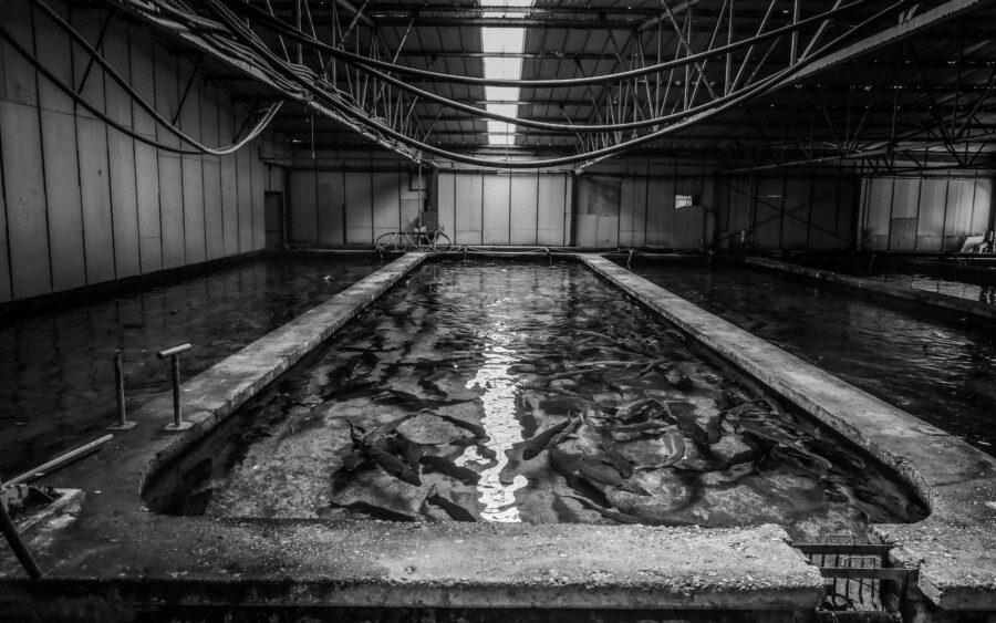 01 Aquaculture Fish Industry Intensive Farm Fishing Sea Aquatic Selene Magnolia P5301074 2lowres Scaled
