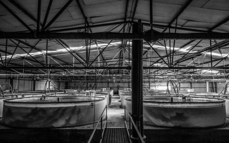 04 Aquaculture Fish Industry Intensive Farm Fishing Sea Aquatic Selene Magnolia P5300997 2lowres Scaled