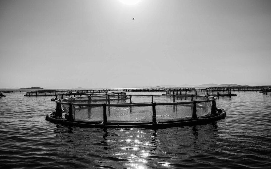 08 Aquaculture Fish Industry Intensive Farm Fishing Sea Aquatic Selene Magnolia P5290279 2lowres Scaled