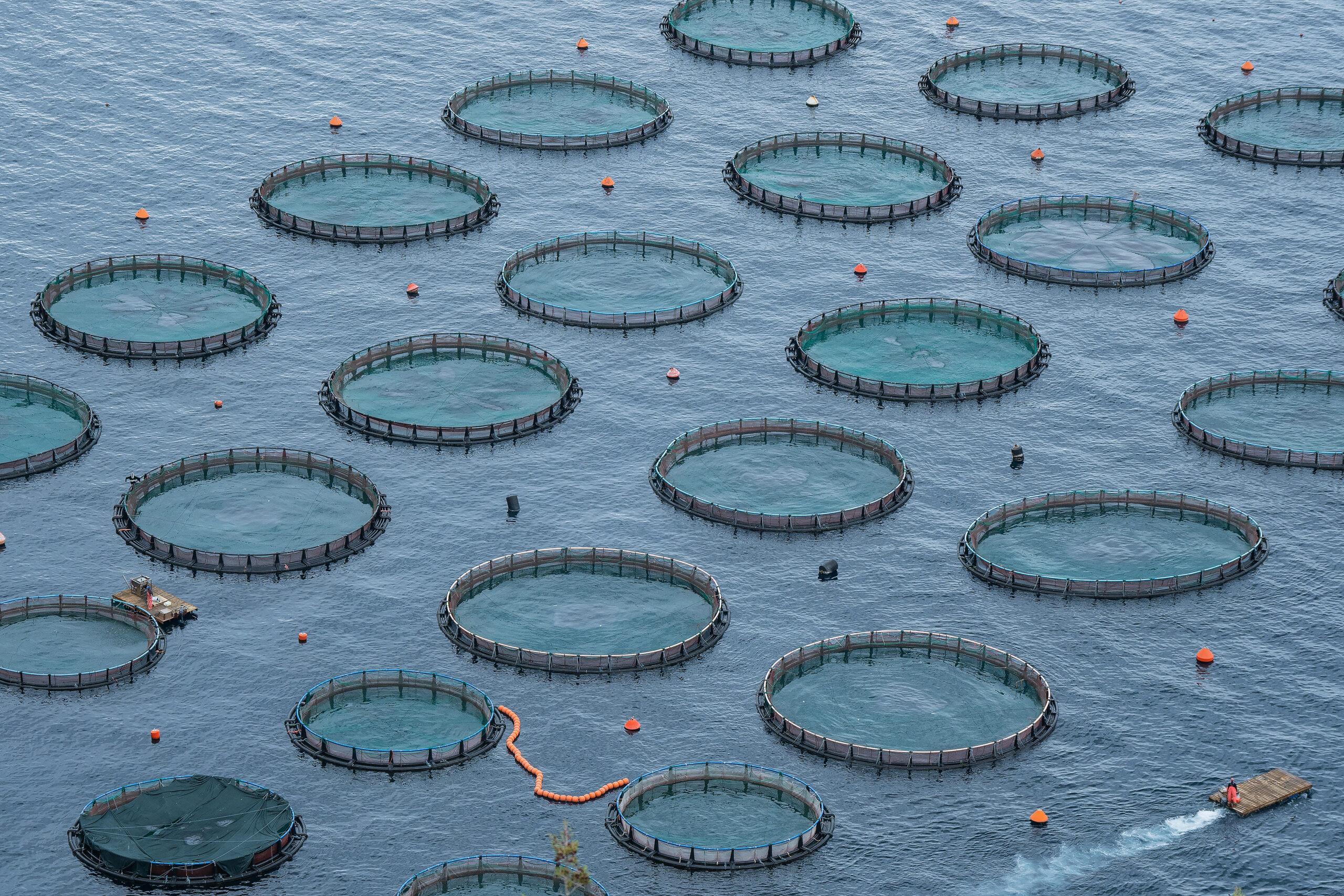 09 Aquaculture Fish Industry Intensive Farm Fishing Sea Aquatic Selene Magnolia 2020 10 28 281412livchiusi