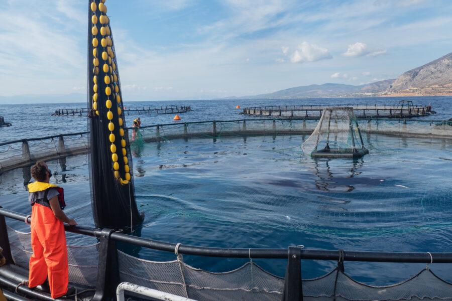 10 Aquaculture Fish Industry Intensive Farm Fishing Sea Aquatic Selene Magnolia 20201030 300796livchiusi