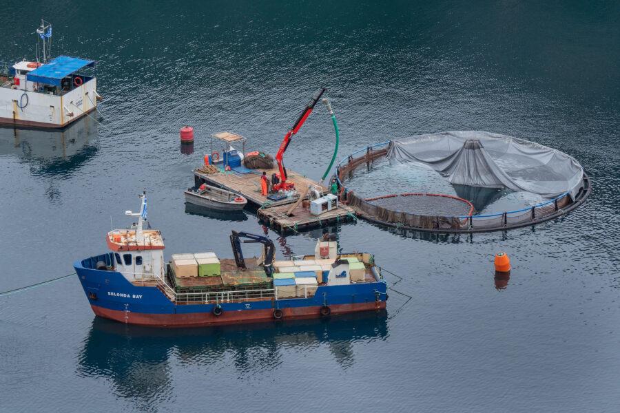 11 Aquaculture Fish Industry Intensive Farm Fishing Sea Aquatic Selene Magnolia 20201028 281245livchiusi