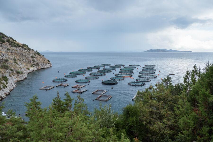 13 Aquaculture Fish Industry Intensive Farm Fishing Sea Aquatic Selene Magnolia 20201028 281493livchiusi