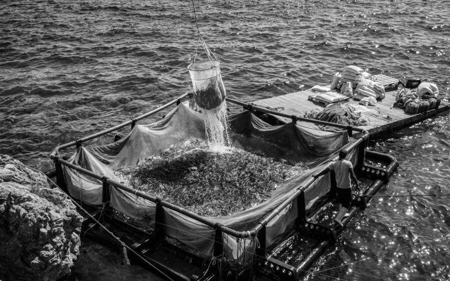 21 Aquaculture Fish Industry Intensive Farm Fishing Sea Aquatic Selene Magnolia P5290475 2lowres Scaled