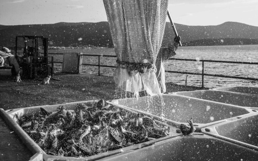 23 Aquaculture Fish Industry Intensive Farm Fishing Sea Aquatic Selene Magnolia P5291189 3lowres Scaled