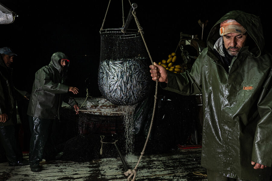 Deck Crew Collects Sardines Onboard The Purse Seine Fishing Boat Pandelis Ii.