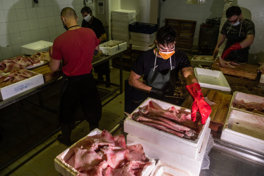 Keratsini, Greece, November 2020. Workers Are Processing Fish During The Night In A Processing Plant Specifically Treating Octopus, Tope, Ray And Sometimes Calamari.