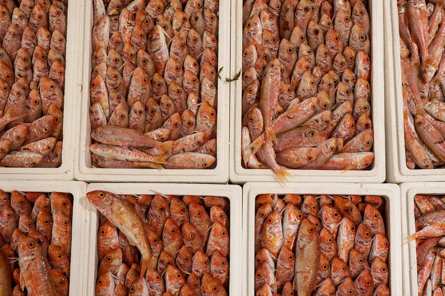Detail Of Red Mullet For Sale At The Largest Fish Auction In Greece.