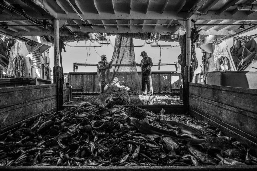 37 Aquaculture Fish Industry Intensive Farm Fishing Sea Aquatic Selene Magnolia P6010632lowres Scaled