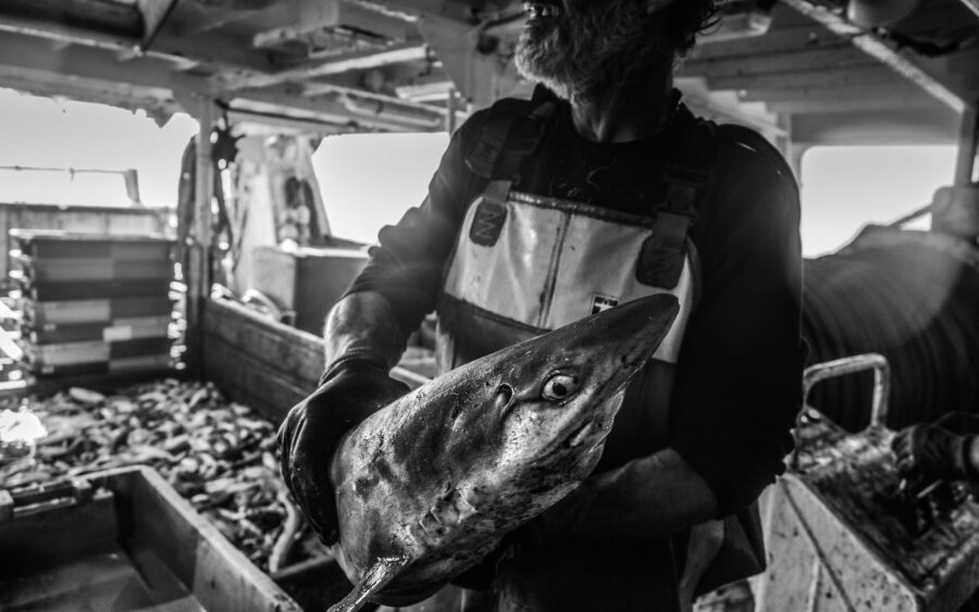 41 Aquaculture Fish Industry Intensive Farm Fishing Sea Aquatic Selene Magnolia P6011657lowres Scaled