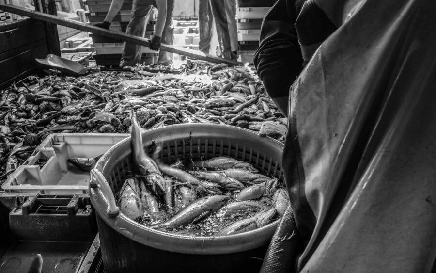 42 Aquaculture Fish Industry Intensive Farm Fishing Sea Aquatic Selene Magnolia P6012260lowres Scaled