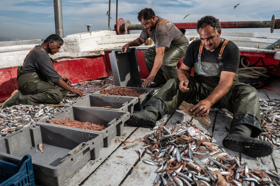Pireus, Greece, November 2020. Workers Onboard The Fasilis Are Sorting The Catch Per Type, And Dividing It Between Fish With Commercial Value And Useless By Catch. On A Typical Day, The Targeted Catch Is Around 350 Kg, While Hundreds Of Kilos Of Dead By C