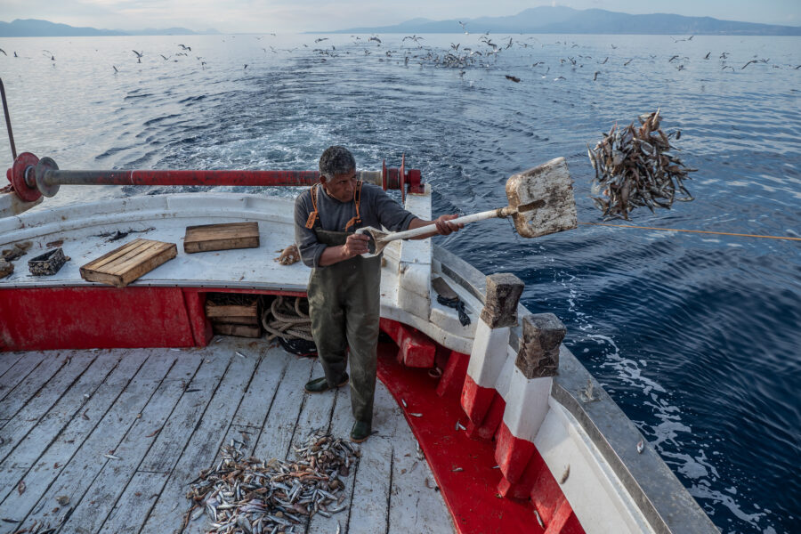 47 Aquaculture Fish Industry Intensive Farm Fishing Sea Aquatic Selene Magnolia 20201102 023452 2