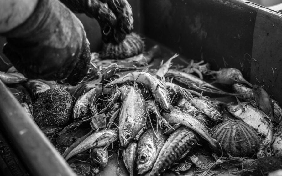 50 Aquaculture Fish Industry Intensive Farm Fishing Sea Aquatic Selene Magnolia P6012494lowres Scaled
