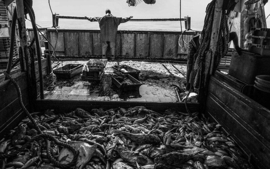 51 Aquaculture Fish Industry Intensive Farm Fishing Sea Aquatic Selene Magnolia P6013487lowres Scaled
